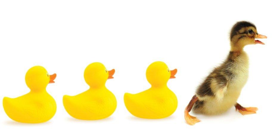 TFT_duckling_LS